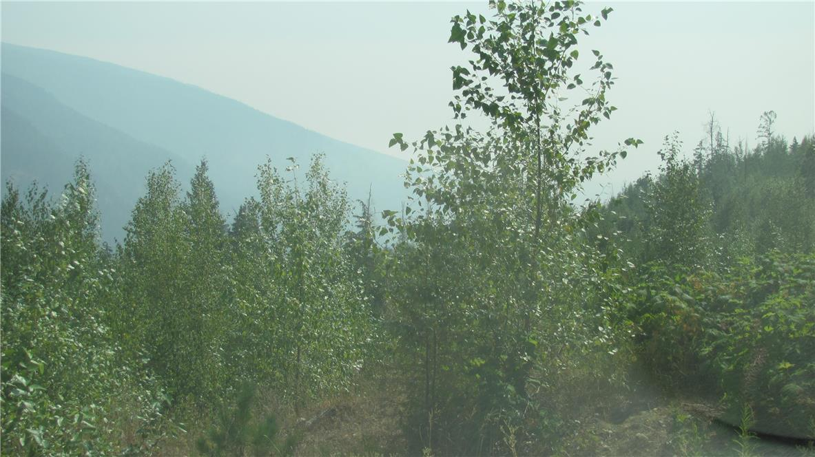 136acres Sugar Lake-Sihlis Road,, Vernon, British Columbia  V1H 2B1 - Photo 9 - 10139930