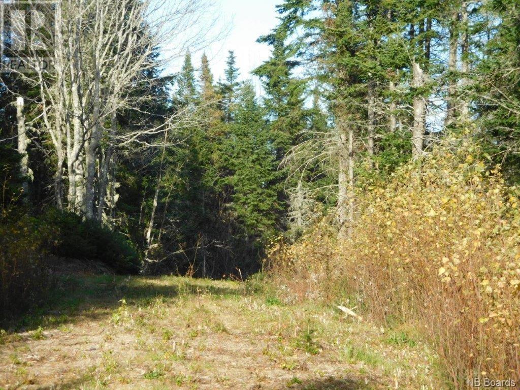 - Lakefield Road, Poodiac, New Brunswick  E4E 3R3 - Photo 3 - NB015125