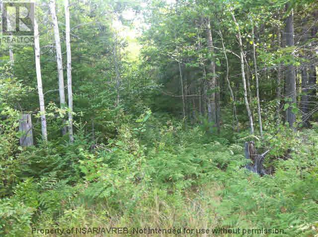 5.5+acres Three Brooks Road, Three Brooks, Nova Scotia  B0K 1H0 - Photo 1 - 201617465