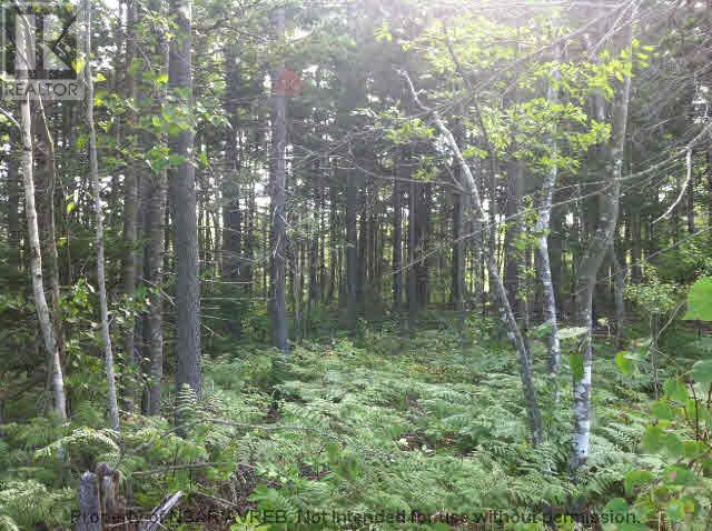5.5+acres Three Brooks Road, Three Brooks, Nova Scotia  B0K 1H0 - Photo 3 - 201617465