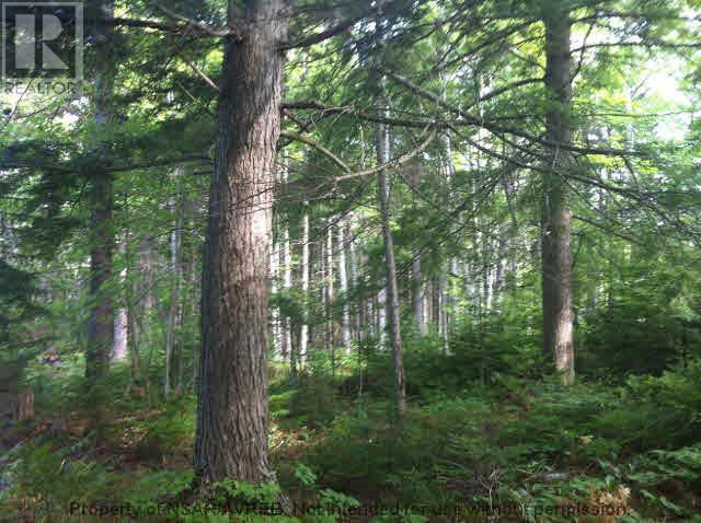5.5+acres Three Brooks Road, Three Brooks, Nova Scotia  B0K 1H0 - Photo 5 - 201617465