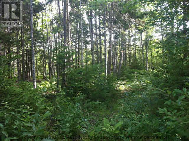 5.5+acres Three Brooks Road, Three Brooks, Nova Scotia  B0K 1H0 - Photo 6 - 201617465