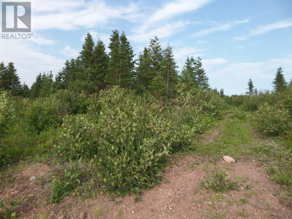 74 Valley Road, Botwood, Newfoundland & Labrador  A0H 1E0 - Photo 11 - 1200066