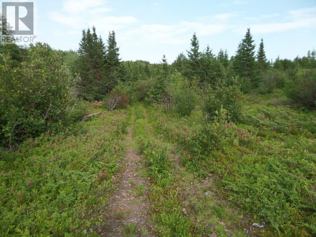 74 Valley Road, Botwood, Newfoundland & Labrador  A0H 1E0 - Photo 9 - 1200066