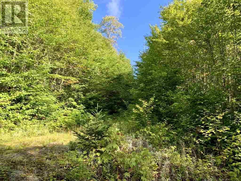 Lot 4 Gairloch Mountain Road, Gairloch Mountain, Nova Scotia  B0E 1B0 - Photo 6 - 202018683