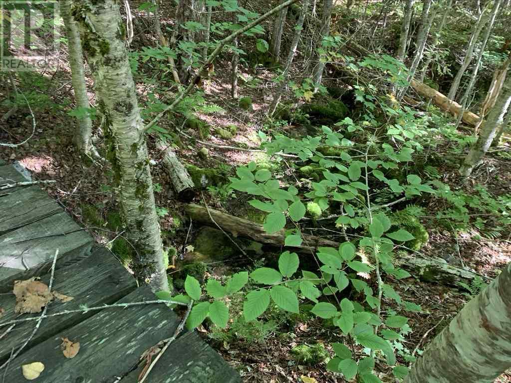 Lot 4 Gairloch Mountain Road, Gairloch Mountain, Nova Scotia  B0E 1B0 - Photo 8 - 202018683