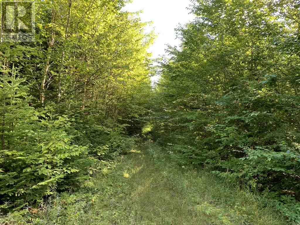 Lot 4 Gairloch Mountain Road, Gairloch Mountain, Nova Scotia  B0E 1B0 - Photo 9 - 202018683