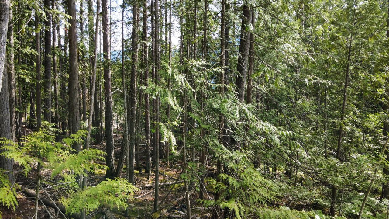 220a Government Hill, Nakusp, British Columbia  V0G 1R0 - Photo 4 - 2454600
