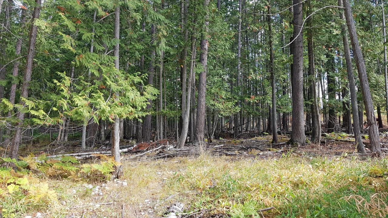 220a Government Hill, Nakusp, British Columbia  V0G 1R0 - Photo 5 - 2454600