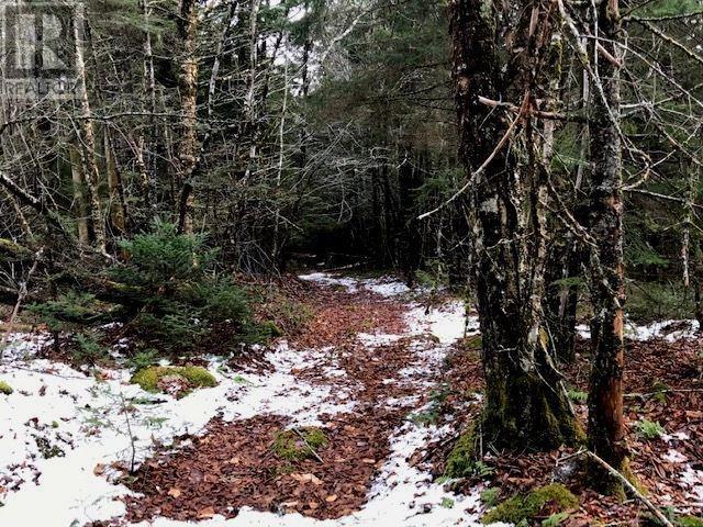 Lot 100abc West Petpeswick Road, West Petpeswick, Nova Scotia  B0J 2L0 - Photo 12 - 5158270