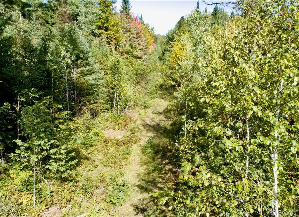 - Back Road, Lyttleton, New Brunswick  E9E 1X5 - Photo 3 - NB025345