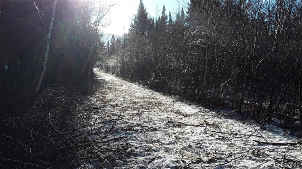 - Back Road, Lyttleton, New Brunswick  E9E 1X5 - Photo 1 - NB025345