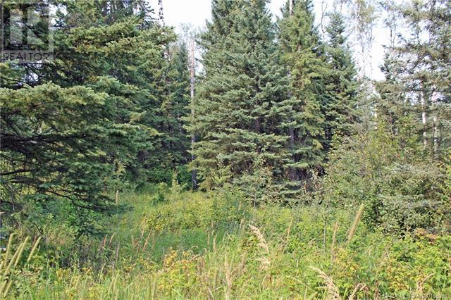 4 Forest Close, Rural Clearwater County, Alberta  T4T 2A4 - Photo 4 - CA0158923