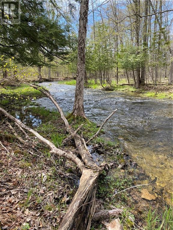 062653 Sunny Valley Road, Georgian Bluffs, Ontario  N4K 5N6 - Photo 6 - 40075572