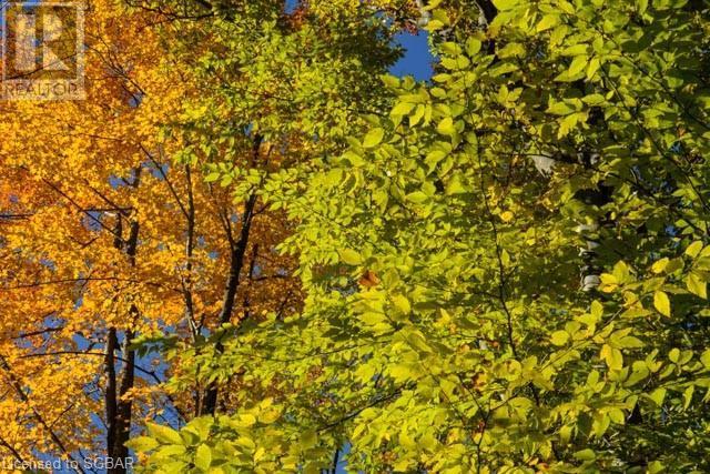 062653 Sunny Valley Road, Georgian Bluffs, Ontario  N4K 5N6 - Photo 10 - 40075572