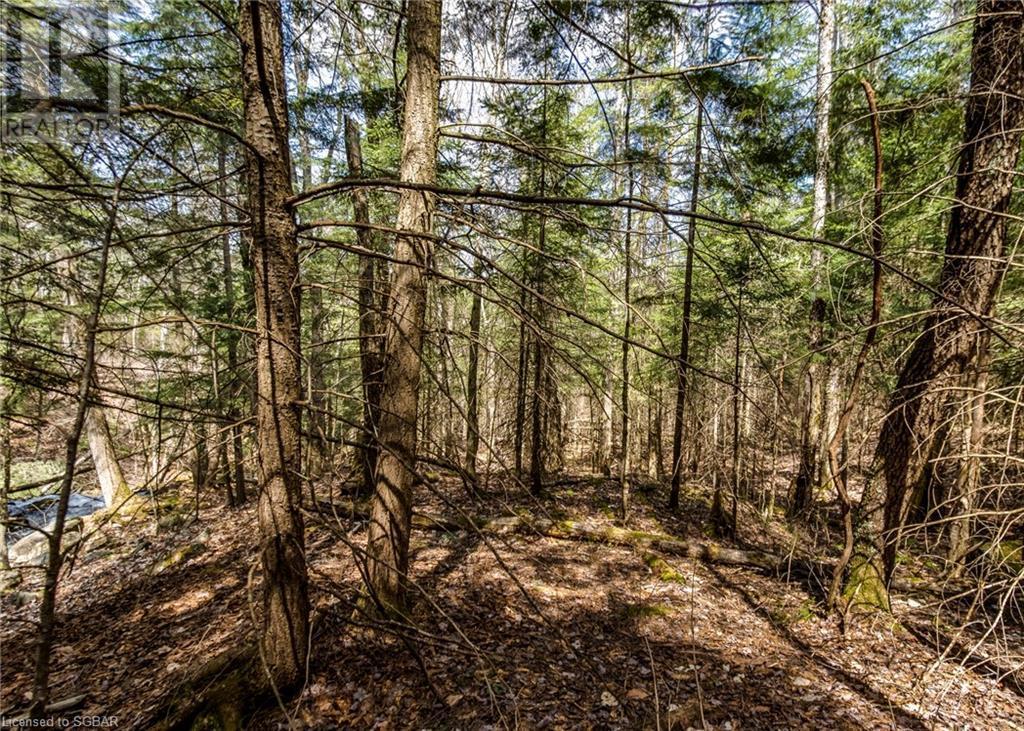 1021 Chetwynd Road, Burk's Falls, Ontario  P0A 1C0 - Photo 26 - 40104430