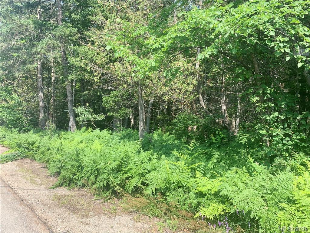 5250 Sq M Route 420, Sillikers, New Brunswick  E9E 1T7 - Photo 4 - NB057111