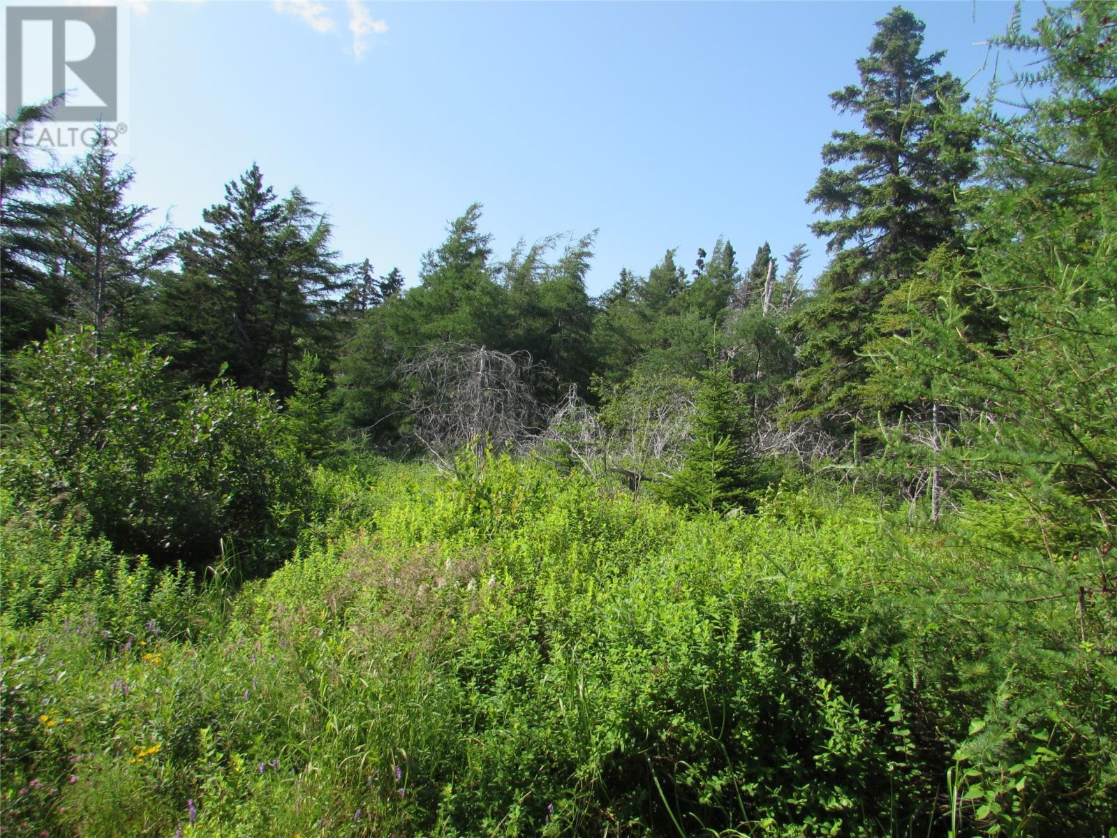 8a Barry's Island North Road, Avondale, Newfoundland & Labrador  A0A 1B0 - Photo 13 - 1230233