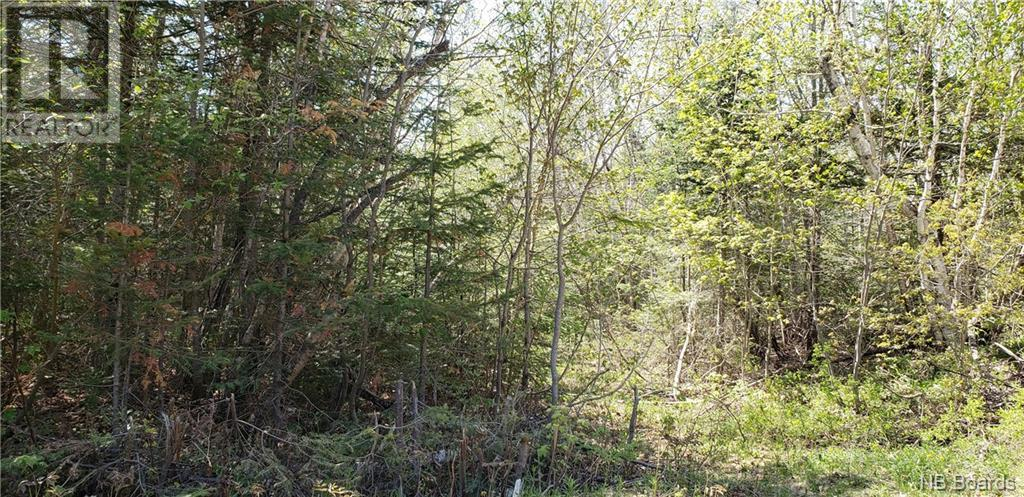 0 Old Royal Road, Birdton, New Brunswick  E3A 9R1 - Photo 6 - NB058470