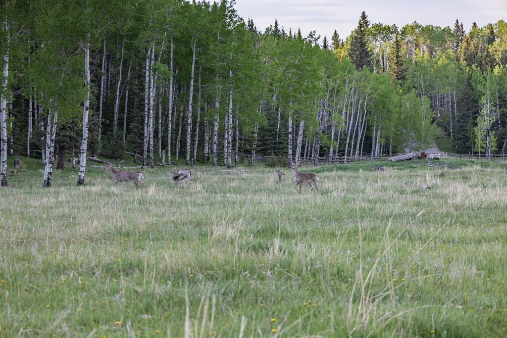 231175 Bracken Road, Rural Rocky View County, Alberta  T0L 0K0 - Photo 25 - A1116621