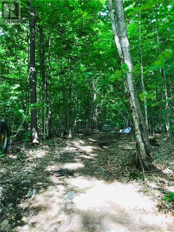 2433 Pickerel And Jack Lake Road, Burk's Falls, Ontario  P0A 1C0 - Photo 8 - 40133978