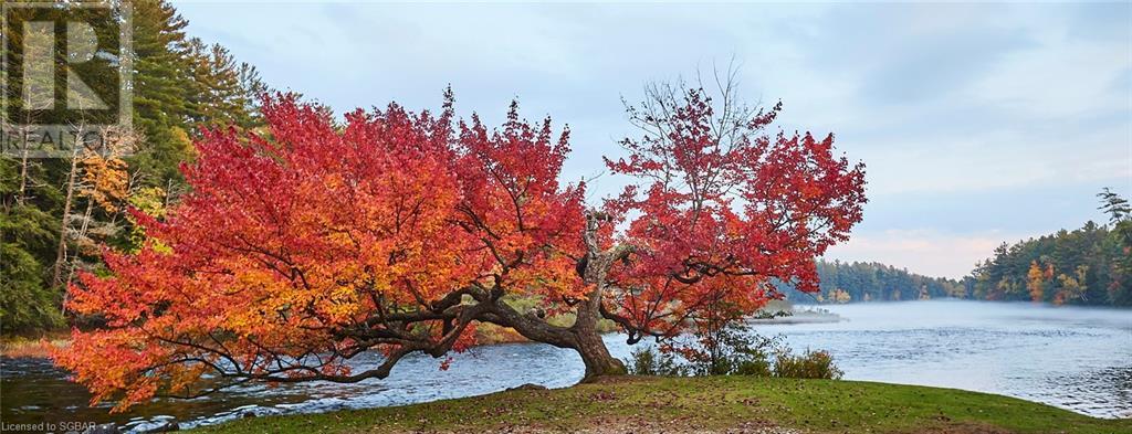 484 Muskoka Road, Port Sydney, Ontario  P0B 1L0 - Photo 47 - 40130502