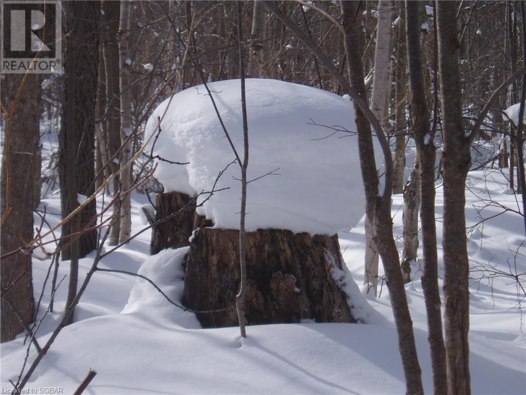 825215 40 Grey Road, Grey Highlands, Ontario  N0H 2S0 - Photo 26 - 40134114