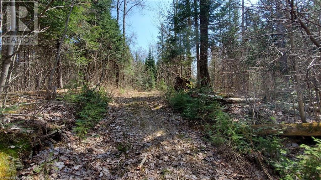 Lt 24 Deer Lake Road, Emsdale, Ontario  P1H 1R1 - Photo 3 - 40145352