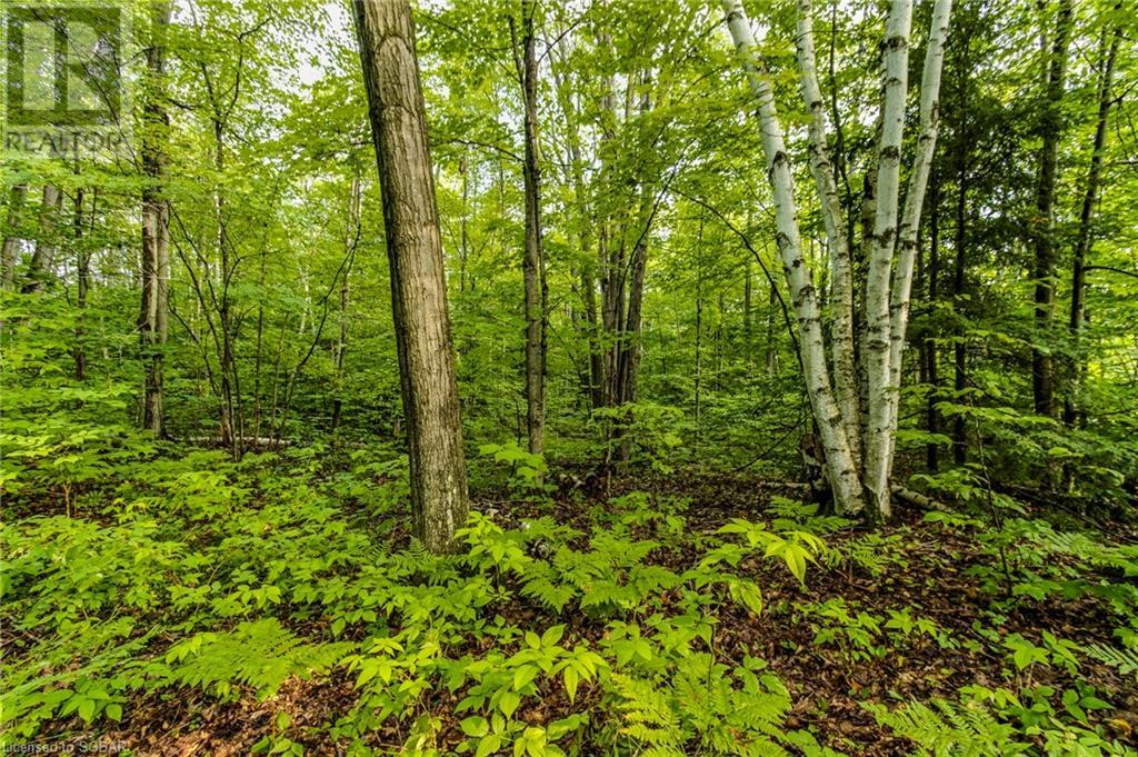 7 Jidamo Miikaans, Christian Island, Ontario  L9M 0A9 - Photo 32 - 40151780