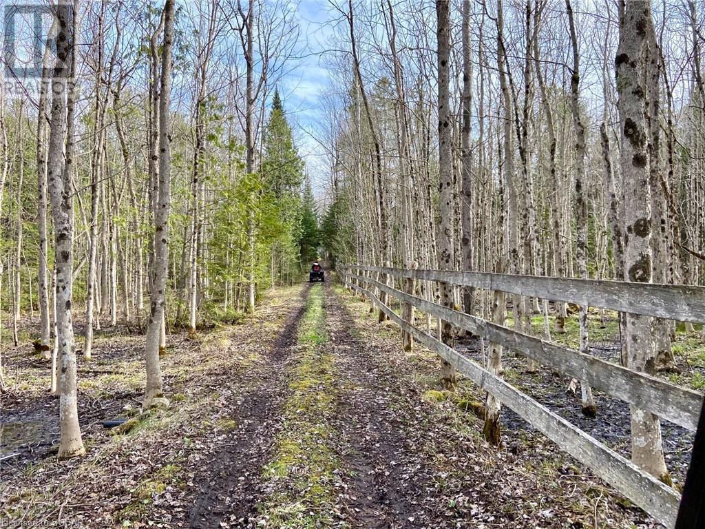 407119 4 Grey Road, Grey Highlands, Ontario  N0C 1J0 - Photo 36 - 40099518