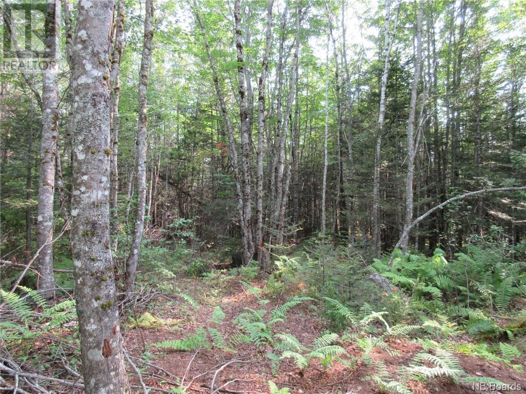 - Central Tower Hill Road, Tower Hill, New Brunswick  E5A 1A8 - Photo 5 - NB062063