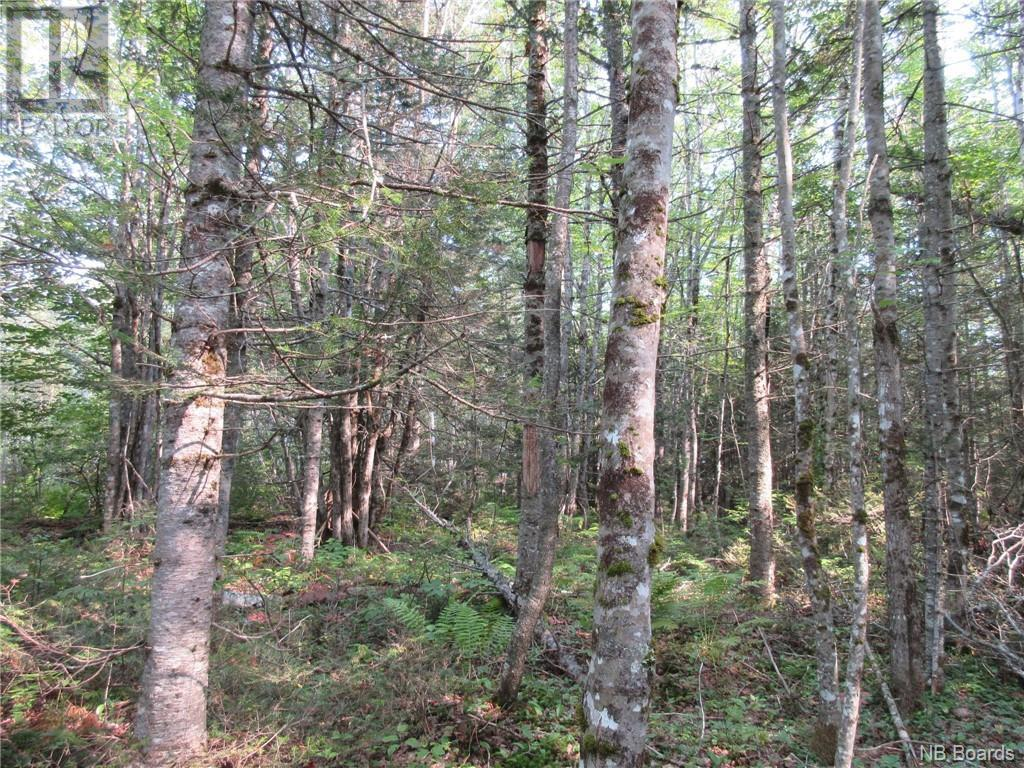 - Central Tower Hill Road, Tower Hill, New Brunswick  E5A 1A8 - Photo 7 - NB062063