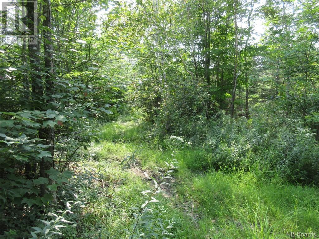 - Central Tower Hill Road, Tower Hill, New Brunswick  E5A 1A8 - Photo 3 - NB062063