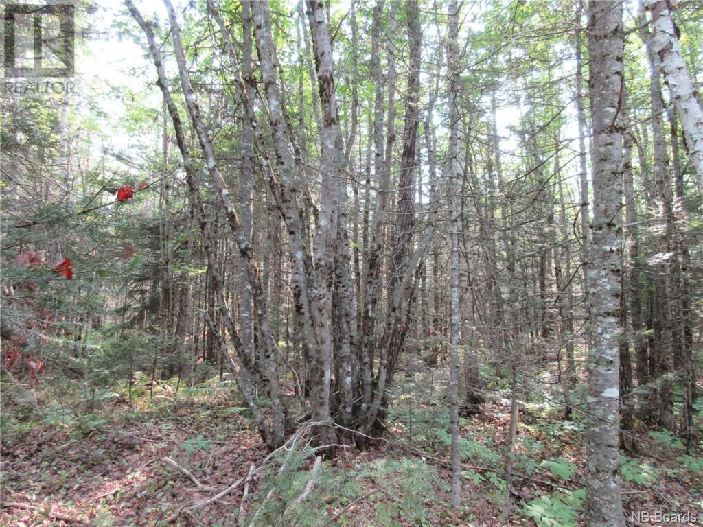 - Central Tower Hill Road, Tower Hill, New Brunswick  E5A 1A8 - Photo 8 - NB062063