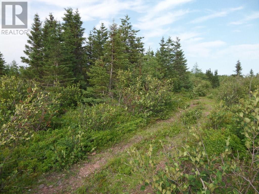 74 Valley Road, Botwood, Newfoundland & Labrador  A0H 1E0 - Photo 12 - 1200066