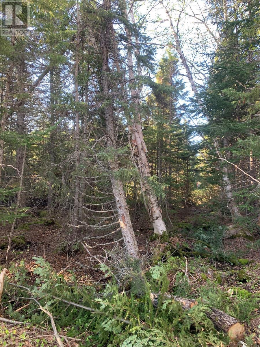 300 Highway 350, Botwood, Newfoundland & Labrador  A0H 1E0 - Photo 5 - 1231266