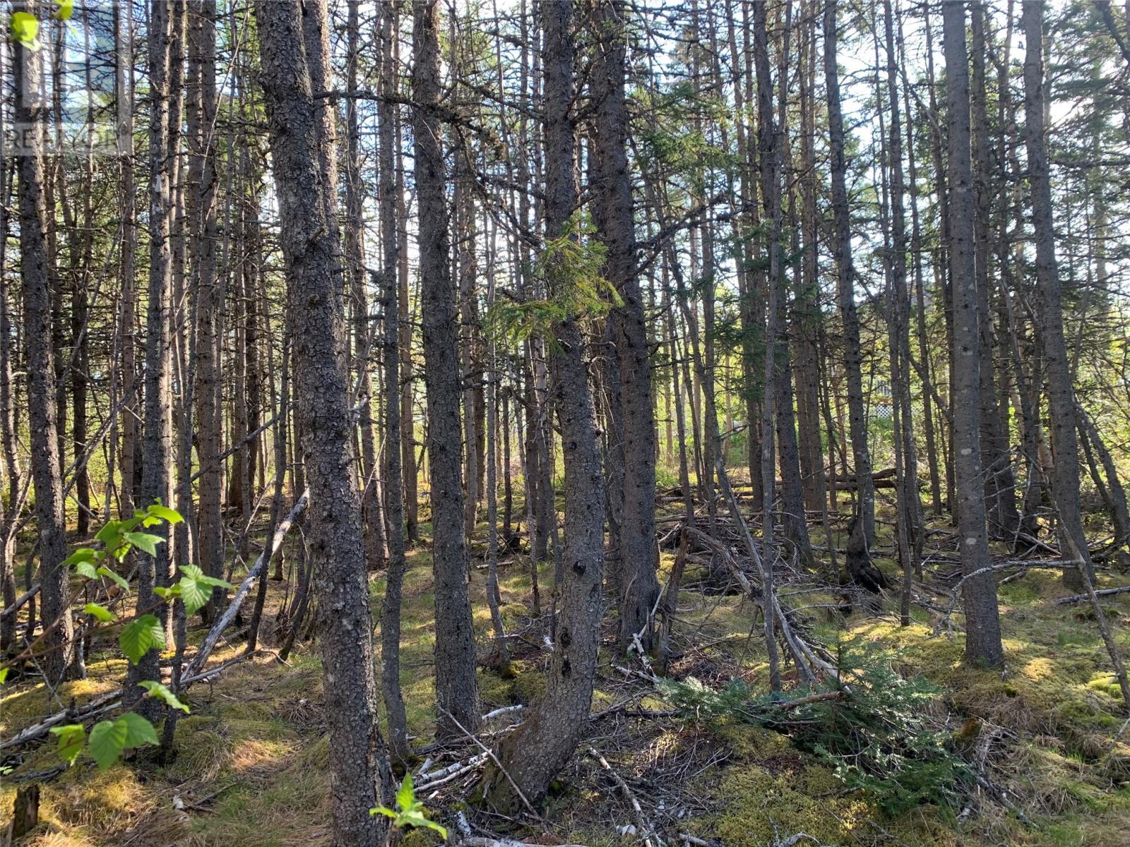 271 Highway 350, Botwood, Newfoundland & Labrador  A0H 1E0 - Photo 13 - 1231267