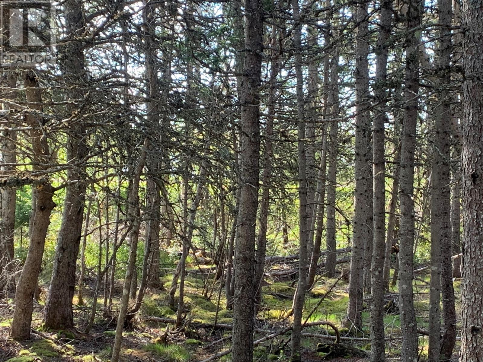 271 Highway 350, Botwood, Newfoundland & Labrador  A0H 1E0 - Photo 14 - 1231267