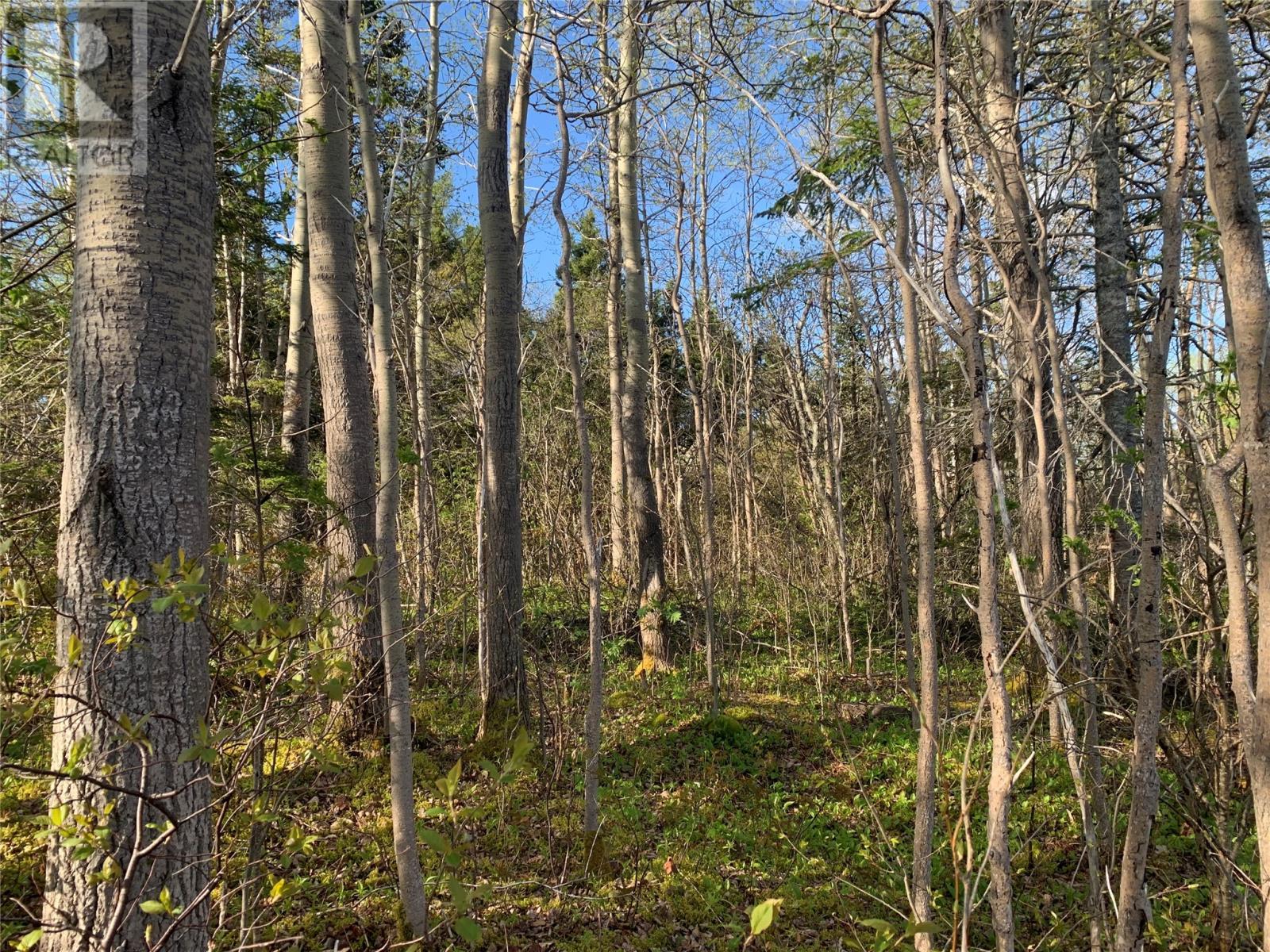 271 Highway 350, Botwood, Newfoundland & Labrador  A0H 1E0 - Photo 16 - 1231267