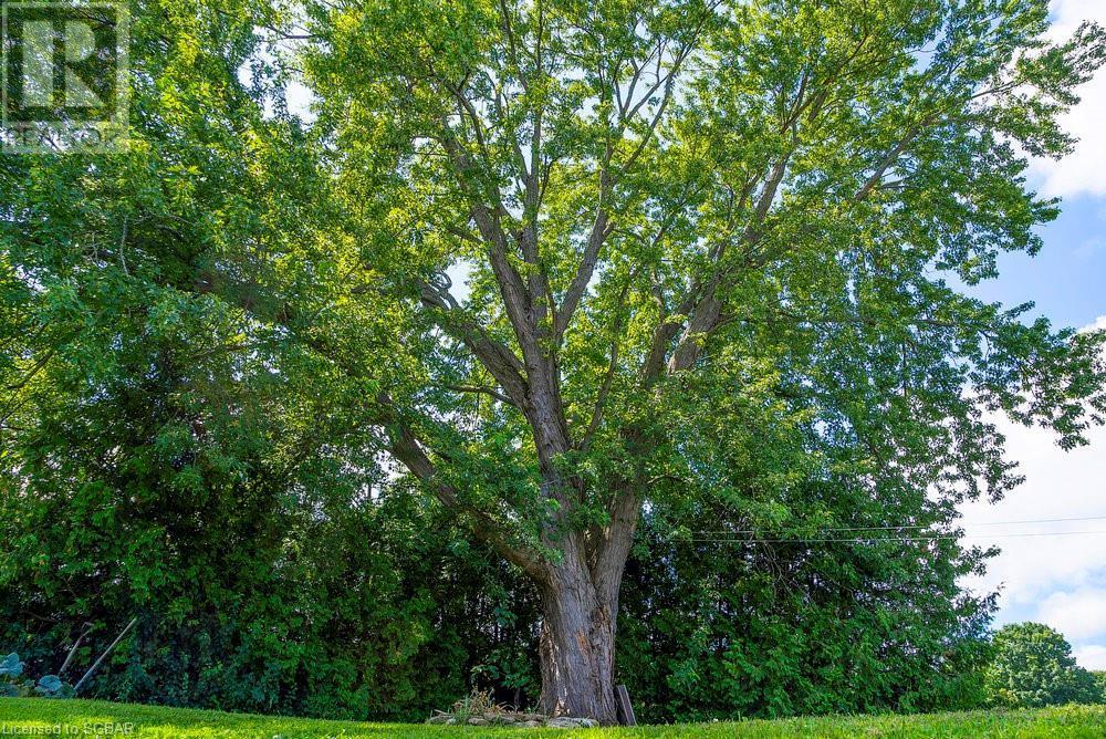 7759 Poplar Sideroad, Clearview, Ontario  L9Y 3Y9 - Photo 24 - 40157314