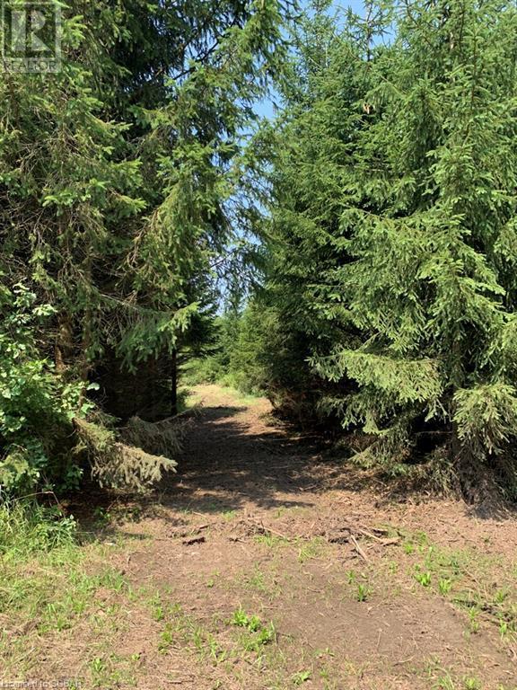 Pt Lt 69-70 35 Sideroad, Grey Highlands, Ontario  N0C 1E0 - Photo 10 - 40150281