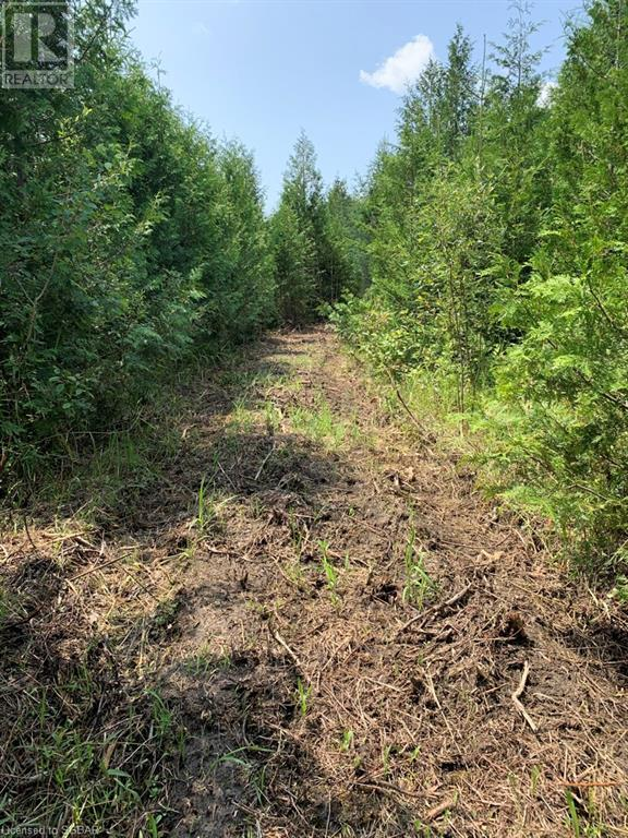 Pt Lt 69-70 35 Sideroad, Grey Highlands, Ontario  N0C 1E0 - Photo 9 - 40150281