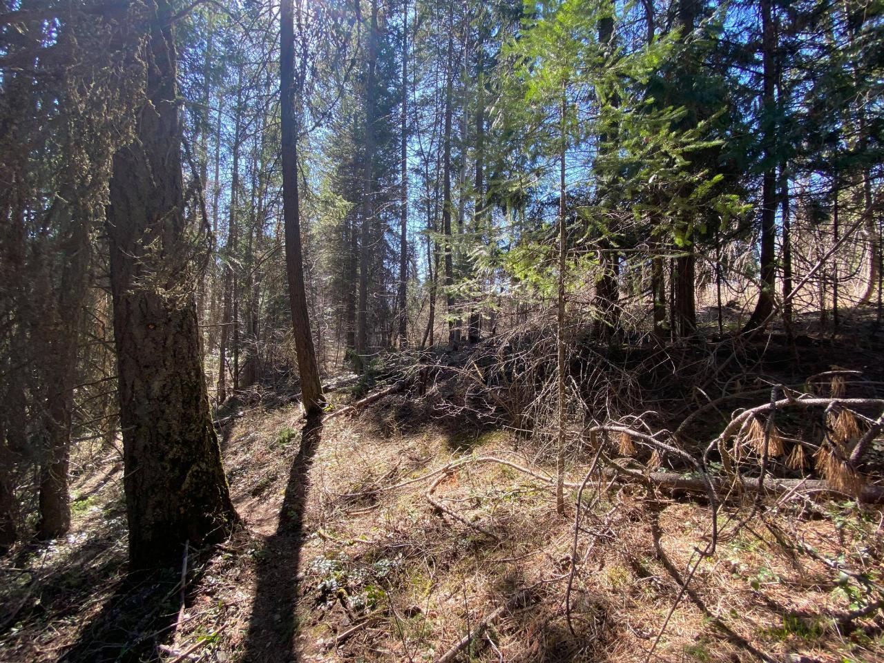 Lot L View Ridge Road, Nelson, British Columbia  V0G 2G0 - Photo 10 - 2460797