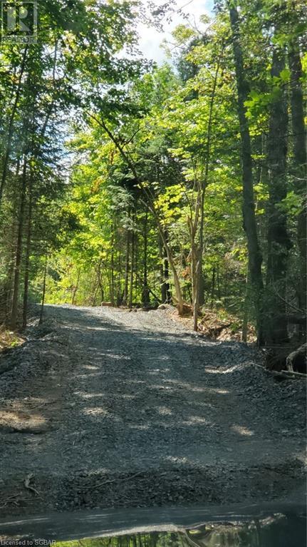 1156 Camel Lake Road, Muskoka Lakes, Ontario  P1L 1X4 - Photo 7 - 40162496