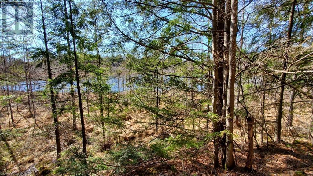 1156 Camel Lake Road, Muskoka Lakes, Ontario  P1L 1X4 - Photo 9 - 40162496