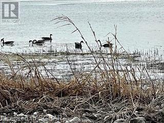 410 Bear Road, Georgina Island, Ontario  L0E 1N0 - Photo 15 - 40143495