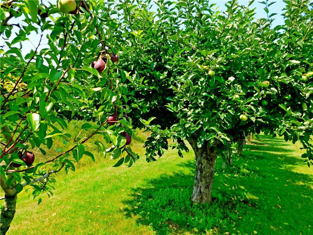 2651 Westbrook Road, West Lincoln, Ontario  L0R 2A0 - Photo 24 - H4113103