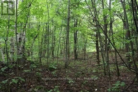 1134 Walkers Line, Algonquin Highlands, Ontario  K0M 2K0 - Photo 16 - X5376587