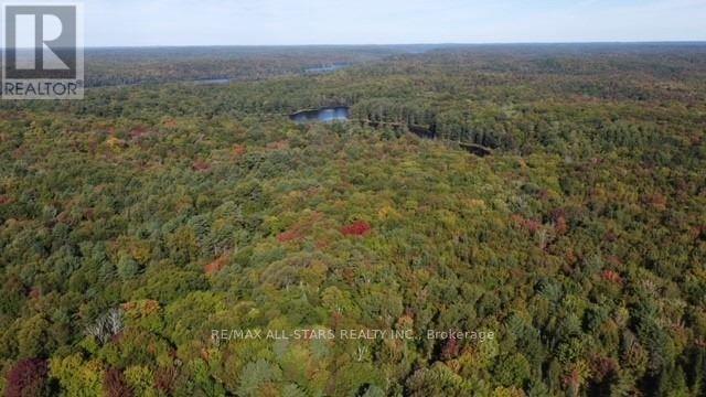 1134 Walkers Line, Algonquin Highlands, Ontario  K0M 2K0 - Photo 6 - X5376587
