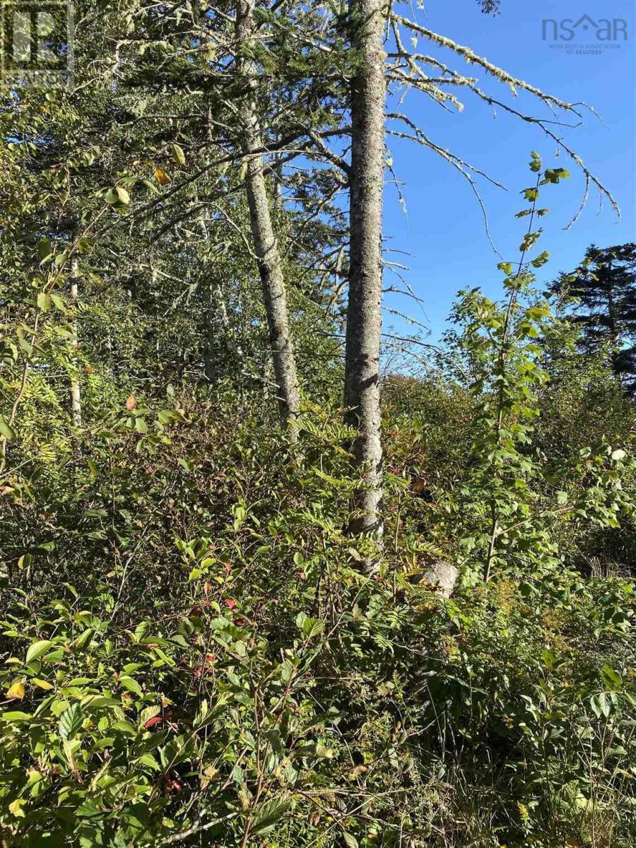 Lot Greenville Road, Greenville, Nova Scotia  B5A 5J6 - Photo 3 - 202124463